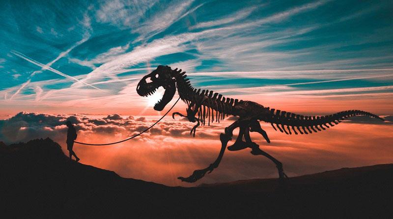 Livre de dinosaure pour enfant