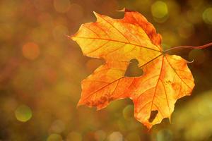 Activité manuelle d'automne